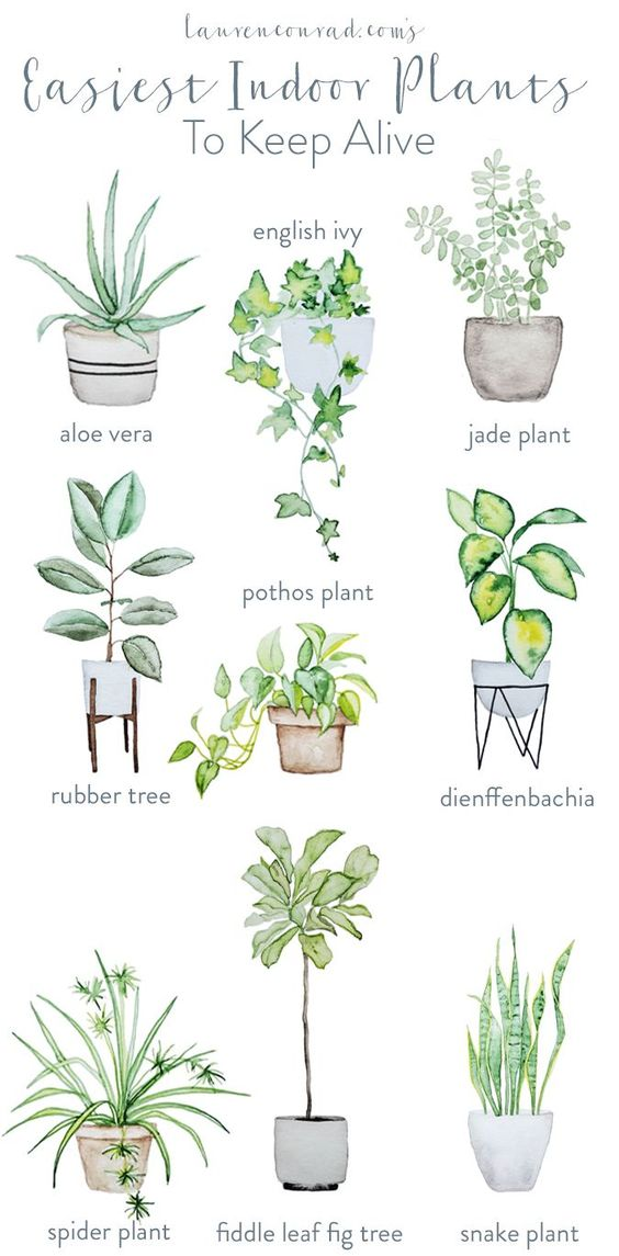 Looking for plants that are easy to maintain? Not got a lot of natural light? Don't worry, these cheat sheets are here to help!