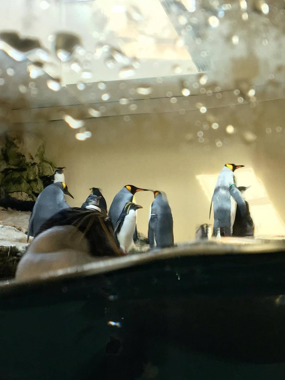 Vienna zoo 8